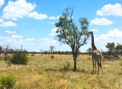 7 týdnů v Jihoafrické republice – rozpočet cesty