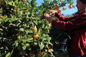 nový zéland - jak hledat práci